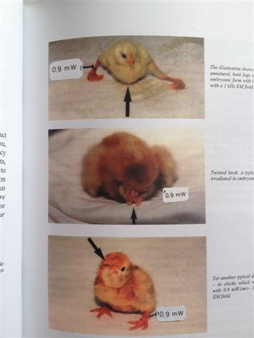 20120818-photo-of-mutated-chicks